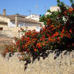 Mallorca ist immer eine Reise wert