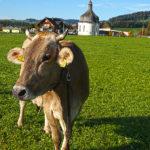 Fotoclub Bregenzerwald24