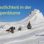 11 Alpenblume