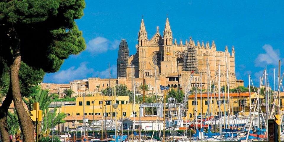 Mallorca Mandelblüte 2020