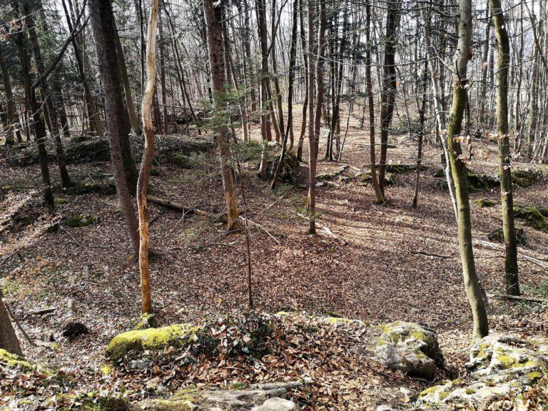 Wanderung Burgruine Neuburg 4.3.2020 - Image 2