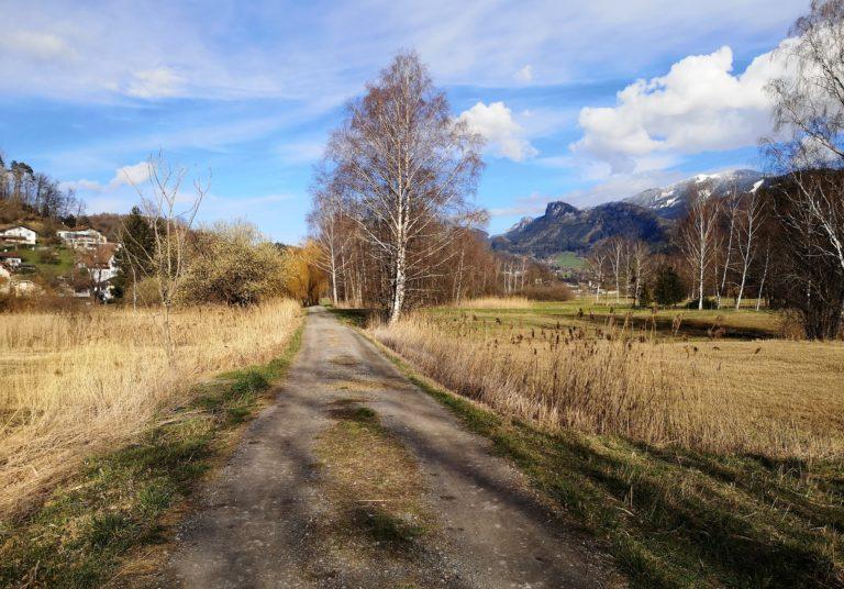 Wanderung Burgruine Neuburg 4.3.2020 - Image 33