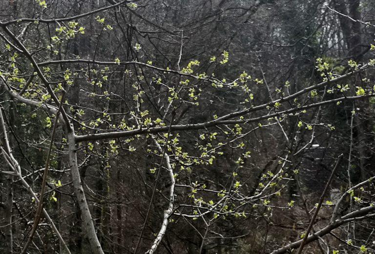 Wanderung Burgruine Neuburg 4.3.2020 - Image 35