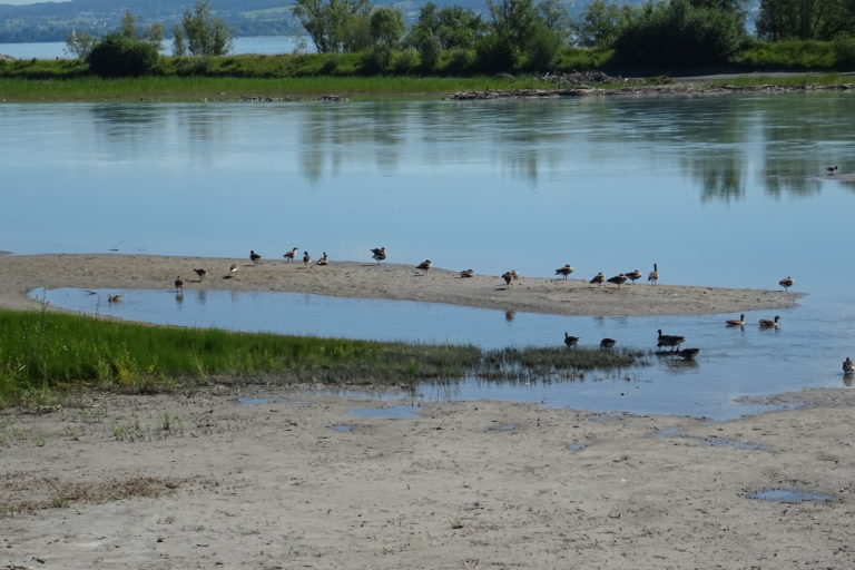 Wanderung zur Lagune Fußach - Image 2