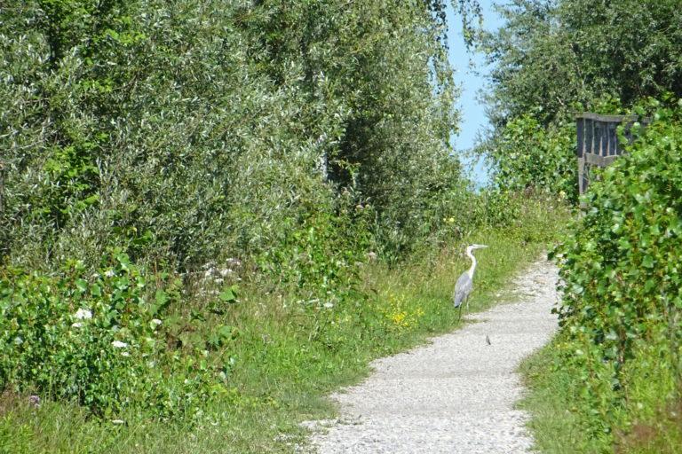Wanderung zur Lagune Fußach - Image 4