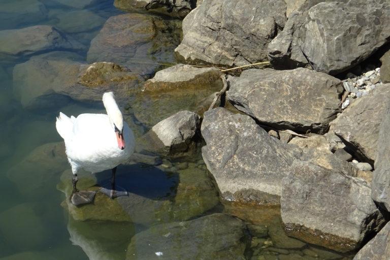 Wanderung zur Lagune Fußach - Image 6