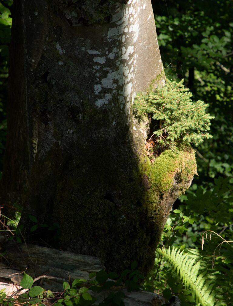 Gütle-Rappenloch-Alploch-Kirchle - Image 50