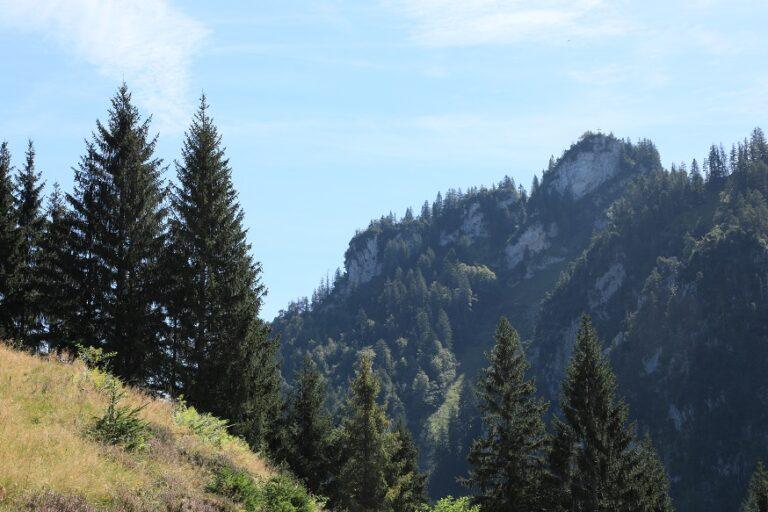 Schuttannen – Staufen - Image 52