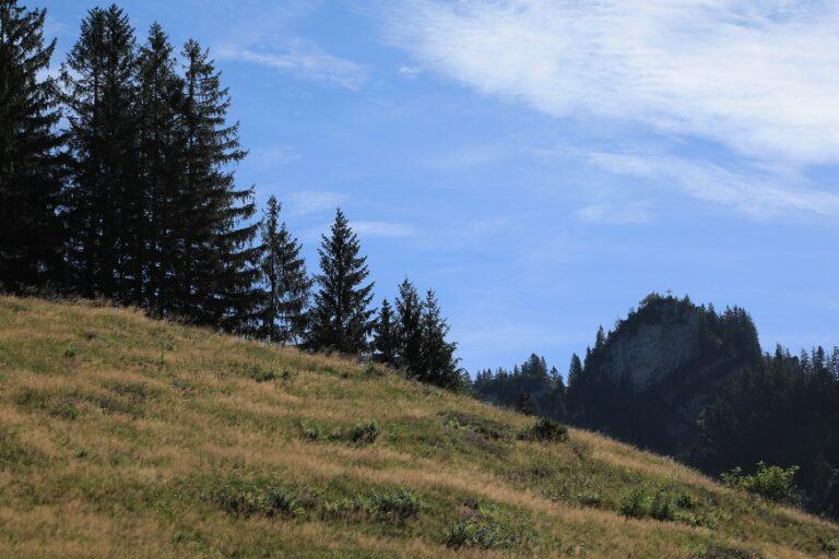 Schuttannen – Staufen - Image 56