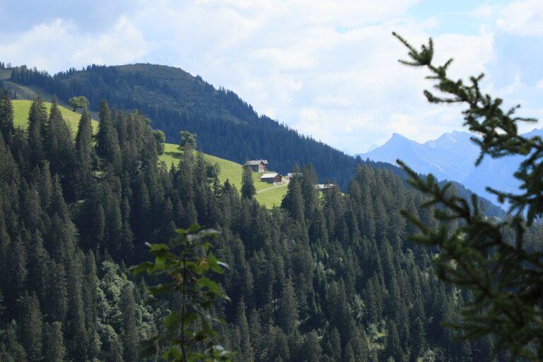 Gaßneralpe und Plansottalpe - Image 16