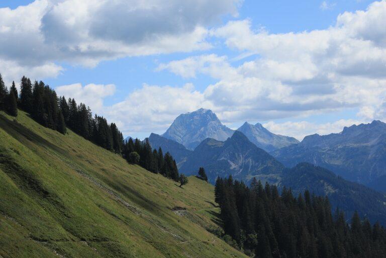 Gaßneralpe und Plansottalpe - Image 35