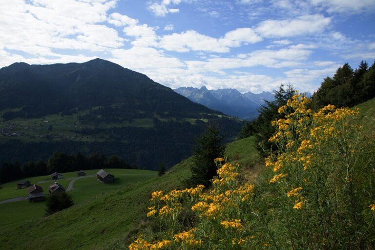 Gaßneralpe und Plansottalpe - Image 2