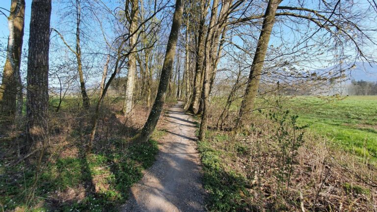 Birken – Schwarzes Zeug - Image 14