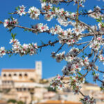 Mallorca6-150x150.jpg